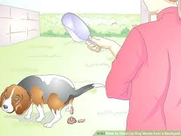 how to clean dog out of carpet image titled clean up dog waste from a