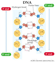 Biolochemistry Topics