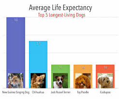 Longest Living Dog Breed Chart Longest Living Dogs About Morkies