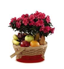 the ftd encircling grace fruit plant basket