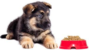 German Shepherd Puppy Food Chart Choosing The Best Food For German Shepherd Puppies
