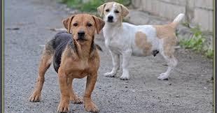 perros se hicieron amigos del hombre