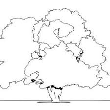 Small Picture 100 ideas Coloring Page Tree With Roots on kankanwzcom