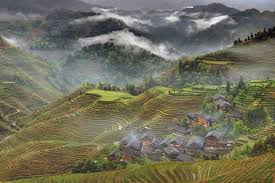 chinese rice field. Brilliant Rice Yao Village Dazhai Guangxi ChinaGrigvovan For Chinese Rice Field