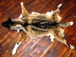 present faux bear rug r9226779 bear skin rugs faux bear skin faux bear skin rug white
