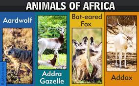 diurnal animals list for kids. Beautiful List To Diurnal Animals List For Kids