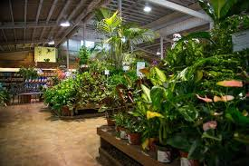 armstrong garden center locations. Interesting Locations Houseplant Department  Armstrong Garden Centers For Center Locations