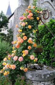 french country gardens rose with gardening ideas