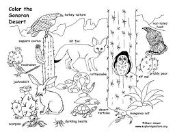 grassland coloring pages desert animals free onli on free printable desert cactus coloring pages for plants