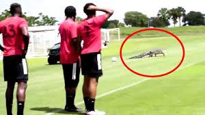 Fans können ihren idolen vermeintlich näher sein als früher. Panik Auf Spielfeld Alligator Unterbricht Fussball Training Video Stern De