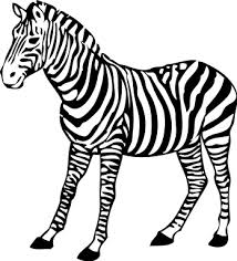 Small Picture Realistic Zebra Coloring Pages shirts Pinterest Kids