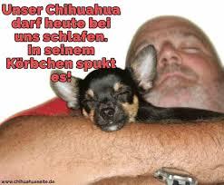 Chihuahua Zitate Und Sprüche