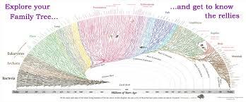Evogeneao The Tree Of Life