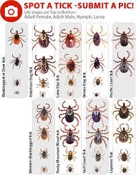 Tick Identification Chart Tickencounter Resource Center Current Tick Activity
