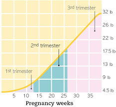 Welcome To Your Second Trimester Part 20