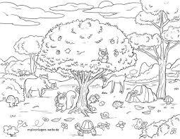 Kostenlose ausmalbilder in einer vielzahl von themenbereichen, zum ausdrucken und anmalen. Malvorlage Waldtiere Tiere Im Wald Kostenlose Ausmalbilder
