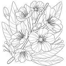 29+ Tranh tô màu hoa mai đẹp, ý nghĩa cho ngày tết