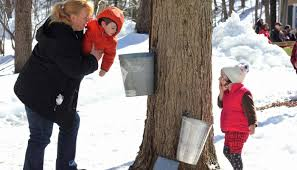 Image result for photos maple sugaring time