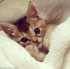 cute kittens in costumes. Perfect Kittens Picture Of Health But Will She Ever Look As Cute When Was Dressed Inside Cute Kittens In Costumes