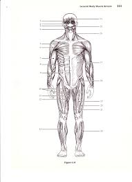 system labeling worksheet rringband muscular system labeling worksheet rringband