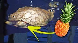 outdoor turtle pond