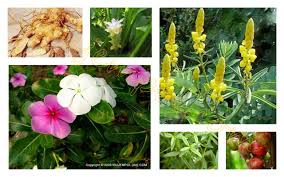 NATURAL HERBS PICTURE