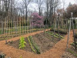 this is the vegetable garden at chanticleer i admired the diagonal crop displays