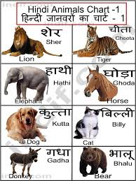 Hindi. | terms for a few common animals | TipOfTheTongue ...