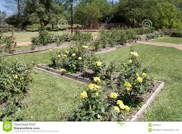 beautiful rose garden in tyler tx usa