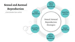 Venn Diagram Of Asexual And Sexual Reproduction Asexual Reproduction Diagram Technical Diagrams