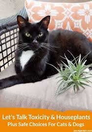 a black cat sitting on a love seat next to an air plant at the bottom