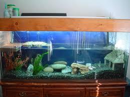 100 gallon turtle tank