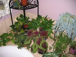 Raising Humidity: How To Increase Humidity For Houseplants