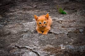 Tierarztkosten für katzen lassen sich nicht exakt vorhersagen. Katzenklingel Die Alternative Zur Katzenklappe Katze Ratgeber De