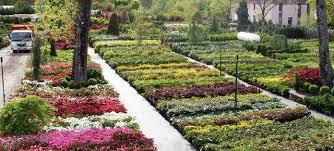 garden nurseries near me. Unique Near Herb Plants For Sale Near Me  Throughout Garden Nurseries S