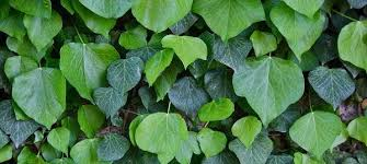 Difference Between Simple And Compound Leaves With