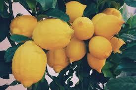 Αποτέλεσμα εικόνας για lemons