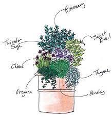 spring herb container garden herb