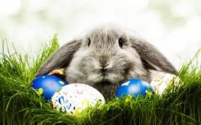 Easter Bunny Desktop Wallpaper HD #6918887