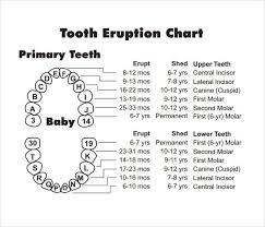 Primary Teeth Chart Letters Www Bedowntowndaytona Com