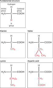 the major macromolecules