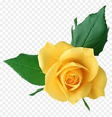 yellow rose clip art yellow rose full hd