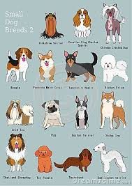 Dog Breed Chart With Names Group Of Small Dogs Breeds Hand Drawn Chart With Breeds