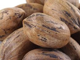 pecan nut. Perfect Pecan Hard Shell Pecans To Pecan Nut