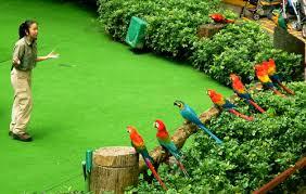 Kết quả hình ảnh cho vườn chim Jurong