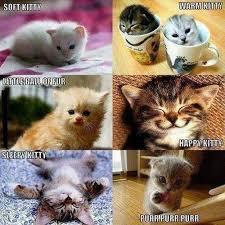 Kitty Song Now With Pictures Meme   Slapcaption.com   cat memes ... via Relatably.com