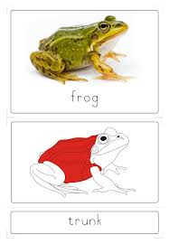 Parts Of A Frog Frog 3 Part Cards Kid Ease