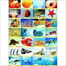 Sea Animals Chart Vidya Chitr Prakashan 4226 B 1 Ansari