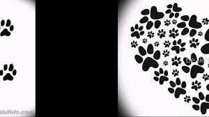 значение тату кошачьи лапки
