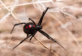 Get Bugs That Look Like Ticks In Michigan Pics